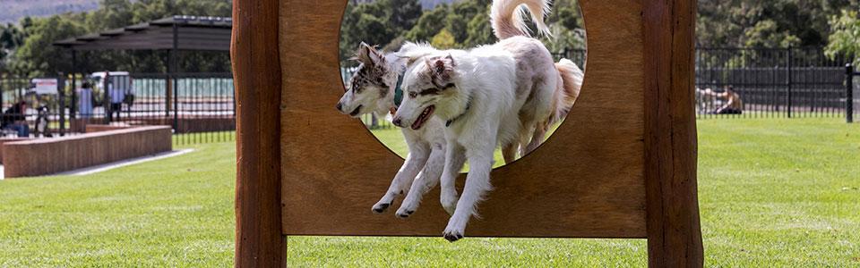 Armadale Dog Parks