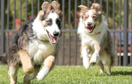 Picture of dogs running