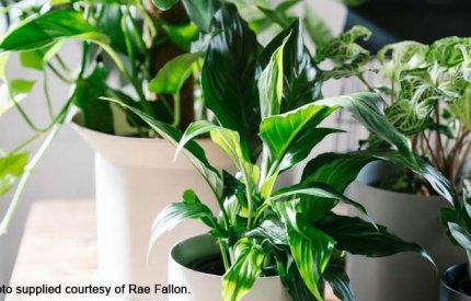 House plants by Rae Fallon