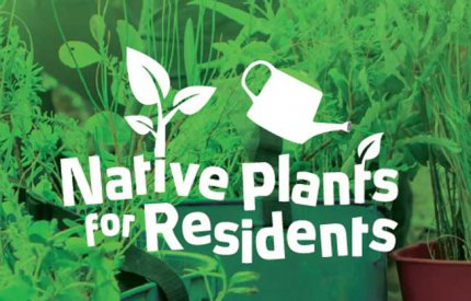 Native plants for residents