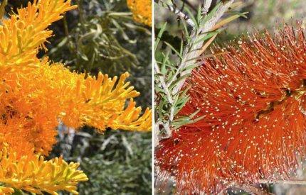 Wildflowers - Birak and Bunura image