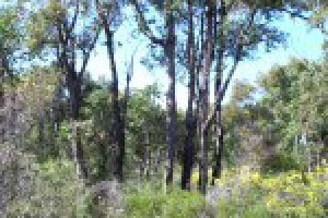 Bushland at Bob Blackburn flora reserve.
