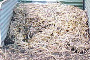 Composting and Compost Bins