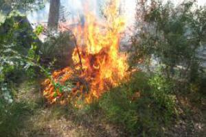 Burning Permit Information